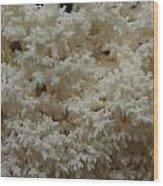 Tooth Fungus Wood Print