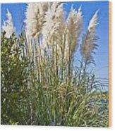Topsail Grasses Wood Print by Betsy Knapp