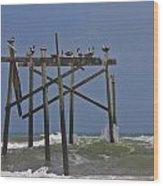 Topsail Ocean City Pelicans Wood Print