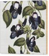 Torenia Asiatica Pulcherrima Wood Print