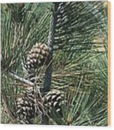 Torrey Pine Cones Wood Print