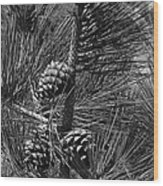 Torrey Pine Cones In Black And White Wood Print
