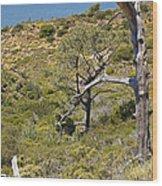 Torry Pines Sentinal Wood Print