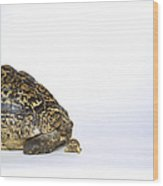 Tortoise Love Wood Print