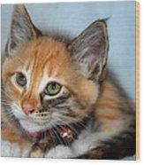 Tortoiseshell Kitten Wood Print