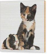Tortoiseshell Kitten With Baby Wood Print