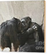 Touching Moment Gorillas Kissing Wood Print