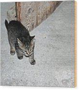 Tough Barn Kitten Wood Print