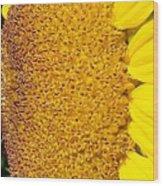Sunflower -tournesol - Flower Wood Print
