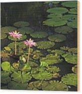 Tower Grove Park Water Lilies Wood Print