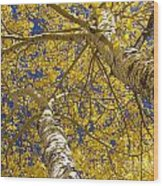 Towering Autumn Aspens With Deep Blue Sky Wood Print