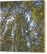 Towering Kodiak Wood Print