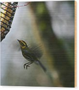 Townsend Warbler In Flight Wood Print