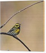 Townsends Warbler Wood Print