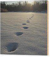Tracks Into The Sunrise Wood Print