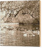 Trail Of Lillypads Wood Print