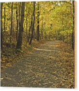 Trail Scene Autumn Abstract 1 Wood Print