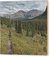 Trail Through Bear Country Wood Print