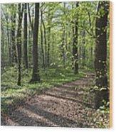 Trail Through Spring Forest Bavaria Wood Print