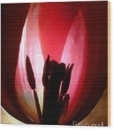 Translucent Tulip Wood Print