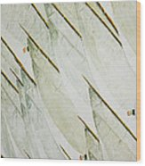 Tre Bandiere Wood Print