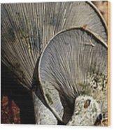 Treasures In The Woods Wood Print