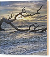 Treasures Of The Sea Wood Print