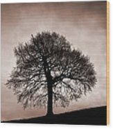 Tree Against A Stormy Sky Wood Print