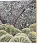 Tree And Barrel Cactus Wood Print