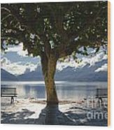 Tree And Benches Wood Print