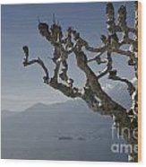 Tree And Mountain Wood Print