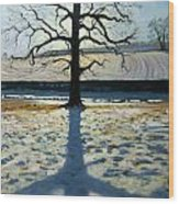 Tree And Shadow Calke Abbey Derbyshire Wood Print by Andrew Macara