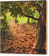 Tree And Shadows Wood Print