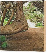 Tree And Trail Wood Print