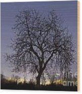 Tree At Night With Stars Trails Wood Print