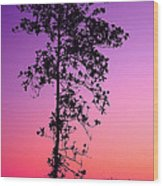 Tree At Twilight Wood Print