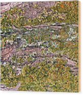 Tree Bark Moss Wood Print