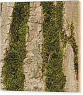 Tree Bark Mossy 4 C Wood Print