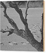 Tree Branch And Footprints On Sleeping Bear Dunes Wood Print
