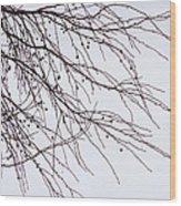 Tree Branch Nature Abstract Wood Print