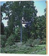Tree By A Pond Wood Print