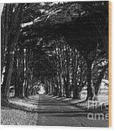 Tree Canopy Promenade Road Drive . 7d9977 . Black And White Wood Print