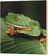 Tree Frog 1 Wood Print