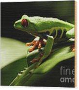 Tree Frog 13 Wood Print