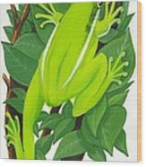 Tree Frog At Rest Wood Print