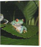 Tree Frog Wood Print