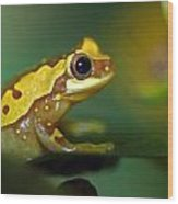 Tree Frog Dream Wood Print