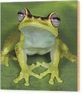 Tree Frog Hyla Rubracyla At Night Wood Print