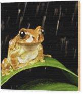 Tree Frog In Rain Wood Print by MarkBridger