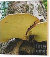 Tree Fungus 2 Wood Print